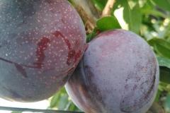 Fructe august 2019