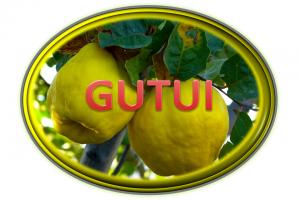 https://pepinieraiaz.ro/wp-content/uploads/2017/10/Gutui-buton-png-300x200.png