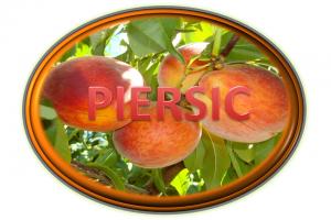 https://pepinieraiaz.ro/wp-content/uploads/2017/10/Piersic-buton-png--300x200.png