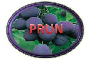 https://pepinieraiaz.ro/wp-content/uploads/2017/10/Prun-buton-png-1-300x200.png